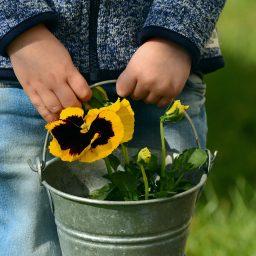enfant et jardinage